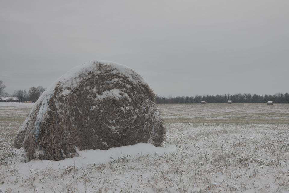 芝生コロンの雪添え2.jpg