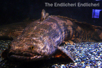 the ENDLICHERI・ENDLICHERI
