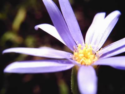 紫の花(マクロレンズ使用)