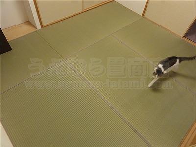 ネコ(猫)や犬(いぬ)が舐めても安心超低農薬栽培い草で表替え狭小部屋も広くミセル(畳替え)大阪市住吉区3