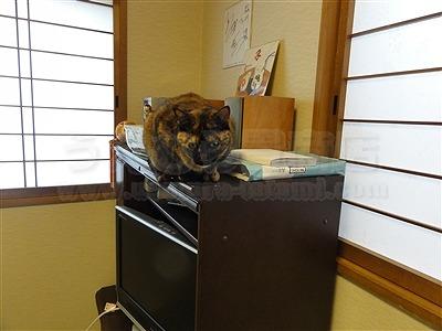 トイレ部屋状態もペット用対応畳に模様替えでネコも人も快適暮らし(大阪交野市)家庭用国産畳専門店いまどきの畳屋さんうえむら畳5