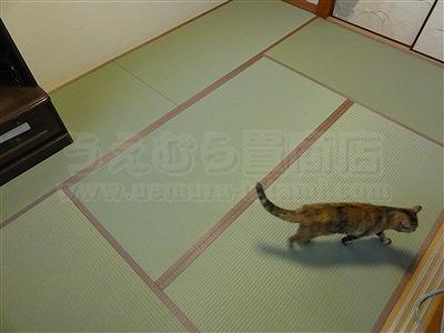 トイレ部屋状態もペット用対応畳に模様替えでネコも人も快適暮らし(大阪交野市)家庭用国産畳専門店いまどきの畳屋さんうえむら畳11