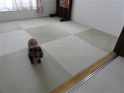【フローリング(洋間)から琉球畳】やわらかい床で暮らしたい。(大阪寝屋川市)家庭用国産畳専門店うえむら畳6