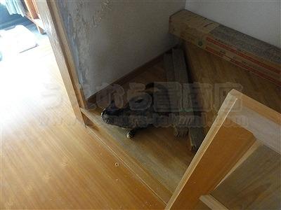【ペット用縁無し琉球畳】続きのお部屋も害虫が発生しにくいペット対応畳に変更。大阪いまどきの畳屋さんうえむら畳11