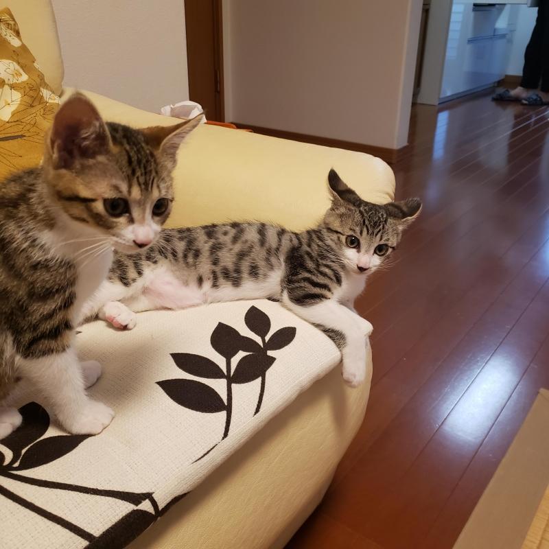 猫塾の画像 p1_6