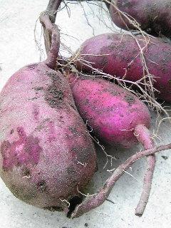 サツマイモ。