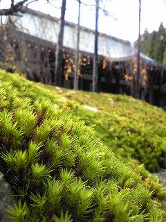 苔から見る本堂。