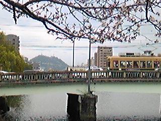 黄金山と電車と桜。
