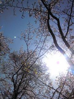 良い天気。