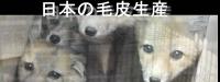 日本の毛皮生産
