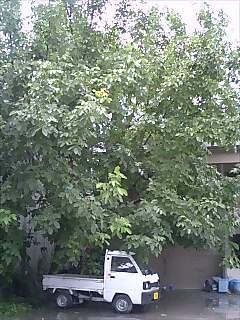 20060710_80418.jpg