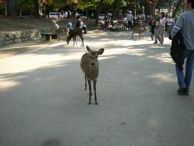 奈良のしか2