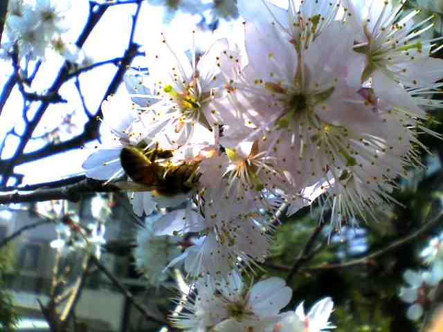 春が来た〜〜^0^