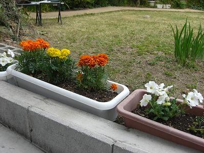 芝生を刈って、花を植えました・・・