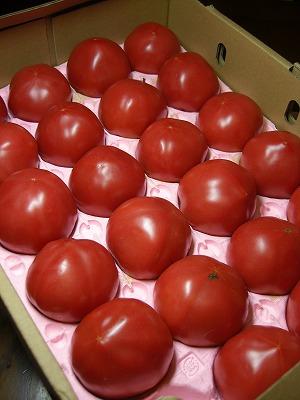 真っ赤なトマト〜〜丸かじりしたら美味しいだろうなww