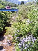 姫川橋から撮りました