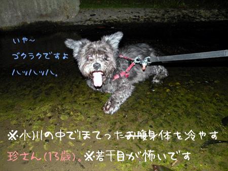 水に浸るロマンスグレー犬