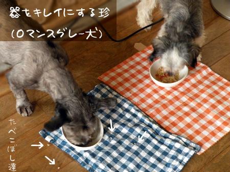 食べこぼす珍(ロマンスグレー犬・13歳)