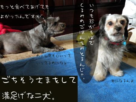 満足げな二犬