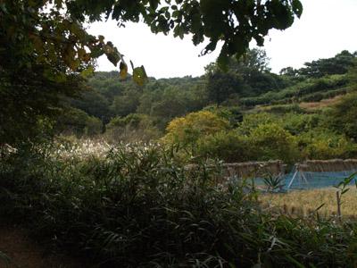 公園内の田んぼ