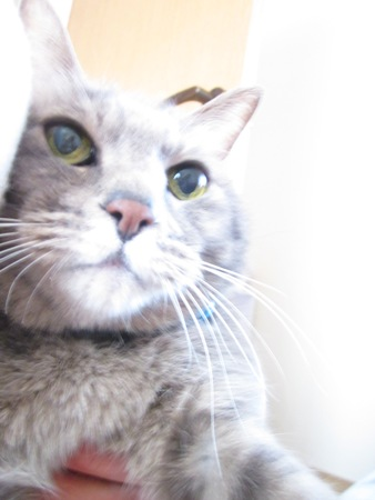 わが家のネコ画像