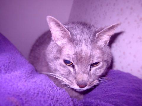 愛猫の写真です