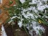 雪とスノーフレーク