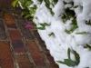 雪とチューリップ