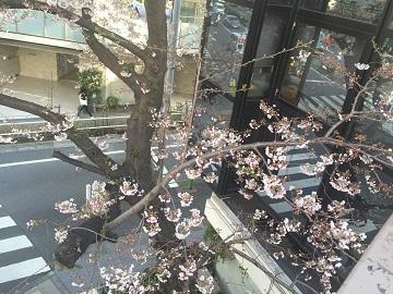 桜近所02