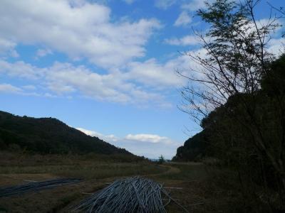 黒竹刈り2