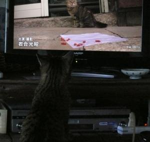 TVを見るパセリ