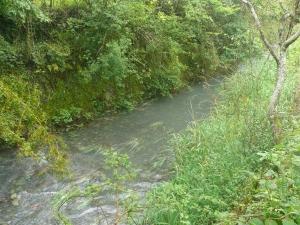 矢井賀川(水あり1)