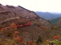 ハゲ山に紅葉が美しい
