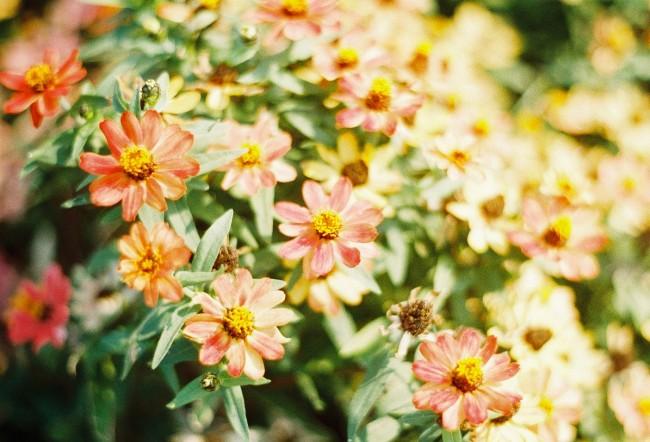 色褪せた日々に、花束を。