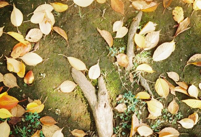 秋の光に落葉が舞って。