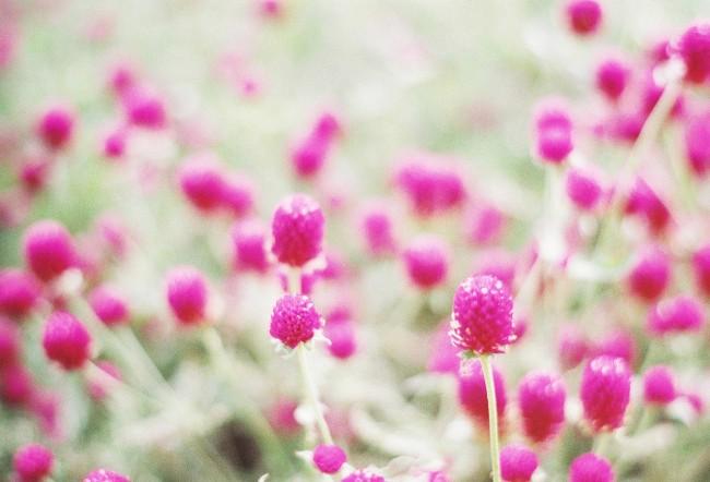 いのちを揺らす、花。