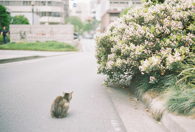 猫。遠め。