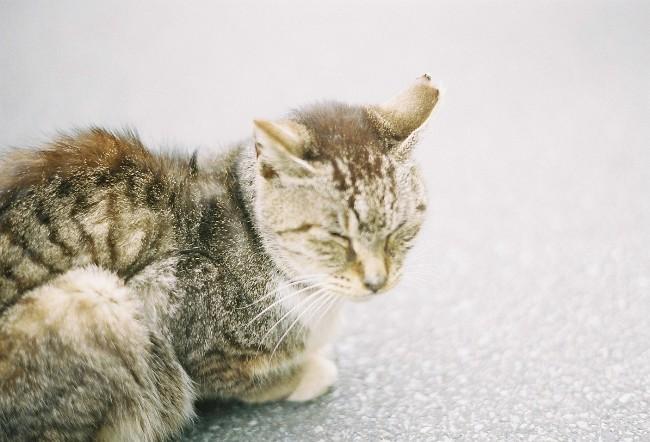猫。目をつぶる。