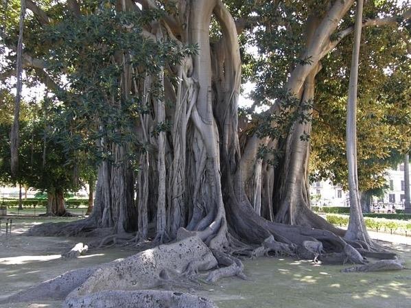 Old tree 671102 640