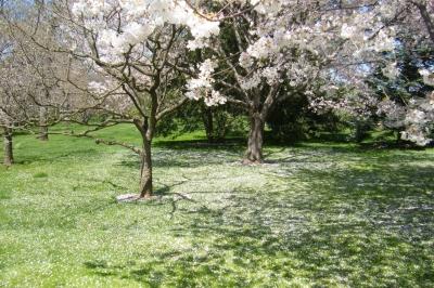 純白の絨毯。