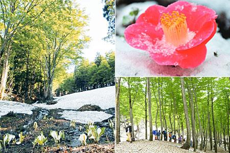 固雪の六十里越街道と旬の山菜料理を楽しむ会