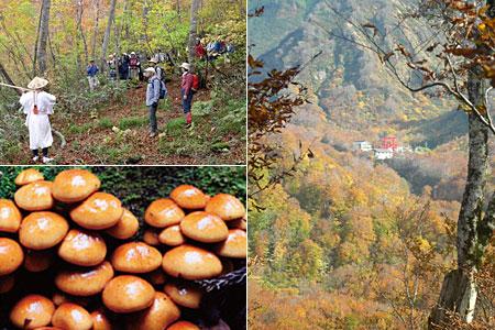 紅葉の六十里越街道と 旬の木の子料理を楽しむ会