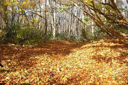落ち葉の六十里越街道をゆく