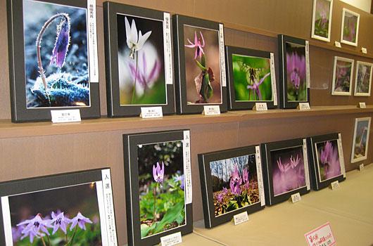 かたくりの花写真コンテスト作品展