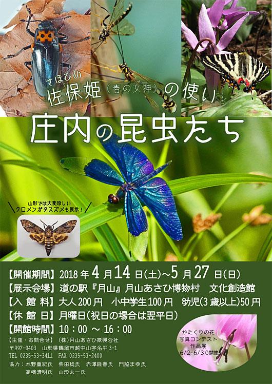 庄内の昆虫展