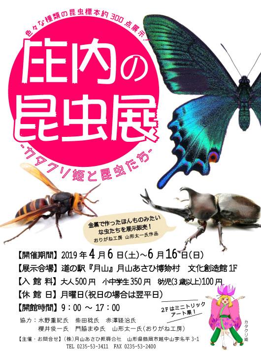 庄内の昆虫展 −カタクリ姫と昆虫たち−