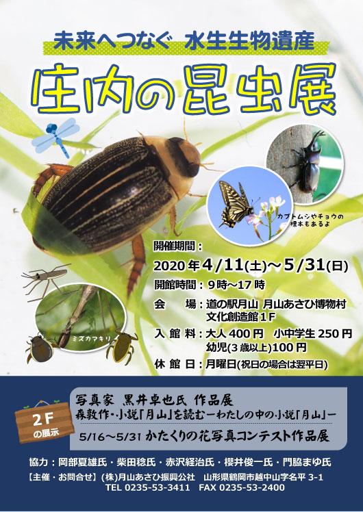 昆虫展2020