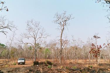 周りは枯れ木ばかり。