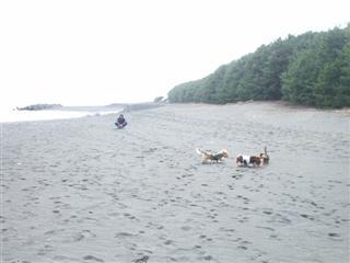 三保の海岸1