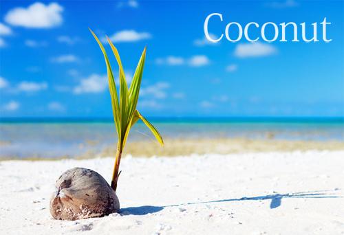 ココナッツイメージ2